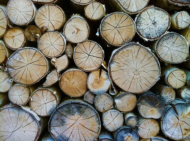 年輪がバラバラな木の幹