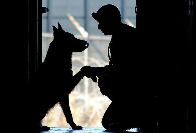 犬を訓練している様子の画像